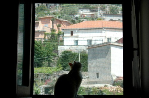 Cat enjoying the View Experiencing Italy: Windows on the Amalfi Coast, by Laura Thayer